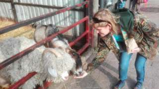 Feeding animals at Greenmeadow Community Farm