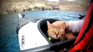 Kucing kayak