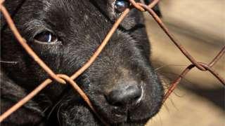 A sad looking dog peering through a fence