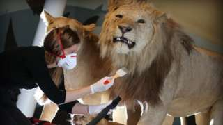 Maddy Moore, Collections Care Technician, National Museums Scotland hoovers lions at the National Museum of Scotland.
