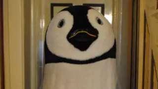 Cuddly penguin