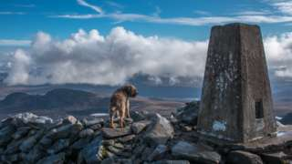 Debbie Stevens' dog Islay admiring the view down to the Flow Country from Ben Hope in Sutherland.
