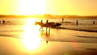surfers walk into the water at sunset