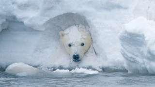 아기 북극곰