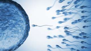 Espermatozoides fertilizando óvulo