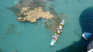 A proliferação de plantas aquáticas tem prejudicado o rio São Francisco, no Nordeste