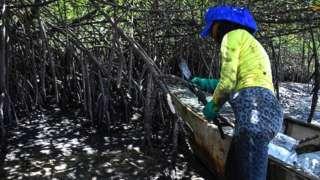 Mangroves in Cabo de Santo Agostinho, Pernambuco state, in Brazil, on October 31, 2019
