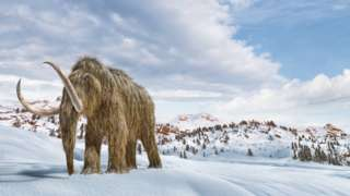 An illustration of a woolly mammoth