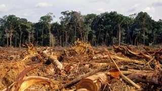Desmatamento da Amazônia, em foto de 2007