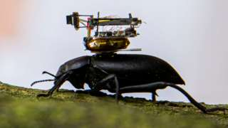 A beetle with a camera on its back