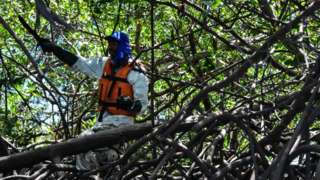 A volunteer removes spilled crude oil from mangroves, in Cabo de Santo Agostinho, Pernambuco state, in Brazil, on October 31, 2019