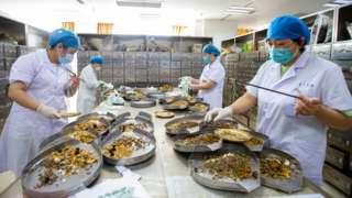 Trabajadores preparando medicina tradicional china.