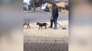 Dog being dragged