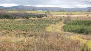Lochwood Moss