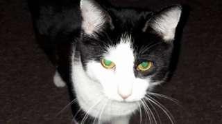 Bruce the cat