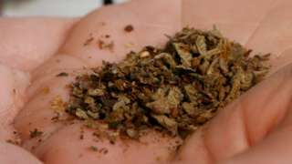 The drug Spice being held in a palm