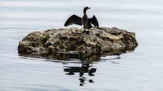 Pássaro no Lago Ohrid