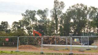 Felled trees at Little Lyntus woodland