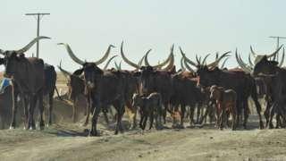 Nyuma ya petroli Chad ibona amadevise ivanye ku matungo