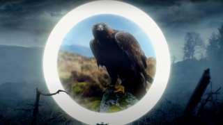 Eagle still from climate video