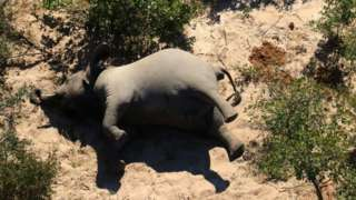 An elephant dead on his side