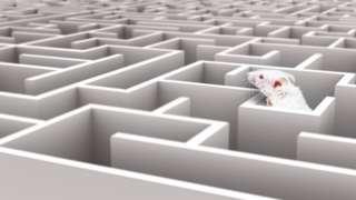 Camundongo em labirinto
