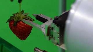 Robot buah.