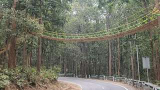 A bridge for animals across a highway