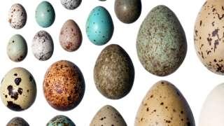 Ovos de diferentes cores