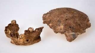 اسرائیلی علاقے رام اللہ سے ملنے والی جبڑے کی ہڈی اور کھوپڑی کا ٹکڑا