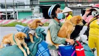 부부가 강아지들과 함께 오토바이를 타고 떠난 여정은 틱톡 앱에서 인기를 끌었다