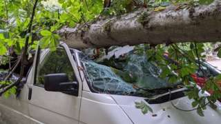 Tree fallen on campervan