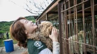 HSI representative holds Korean dog