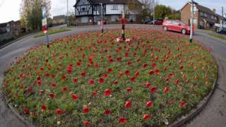 Poppies on roundabout