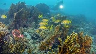Corais na costa brasileira