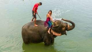 치트완 국립공원에서 코끼리가 관광객에게 물을 뿌리고 있다