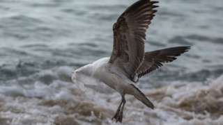 A seagull struggles to take flight covered by a plastic bag