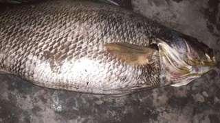 مچھلی، گوادر، بلوچستان، پاکستان