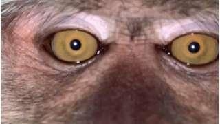 بندر کی سیلفی
