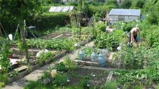 Allotment near Rivelin, Sheffield