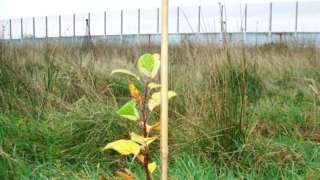 Sapling growing at HMP Haverigg