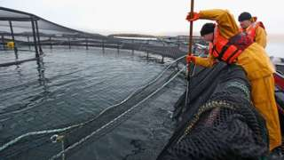 Salmon farming in Scotland