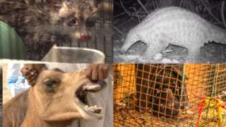 Animals implicated in disease outbreaks