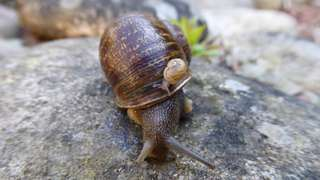 Jeremy the lefty snail and one of his babies