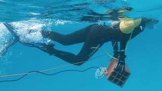 바다 속 소음 풍경을 기록하는 잠수부