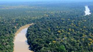The researchers studied an area of forest in a remote corner of northeaster Peru