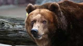 莫斯科动物园中的熊