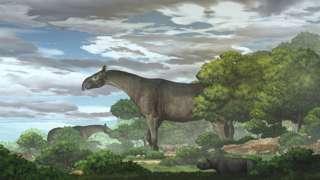 کرگدن عظیمی که ۲۷ میلیون سال پیش می زیست