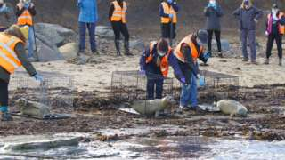 Three seal pubs being released into the sea