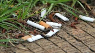 Cigarette butts on grass